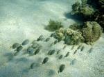 Recifes,coral,vida marinha