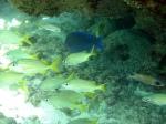 Peixes,das piscinas naturais